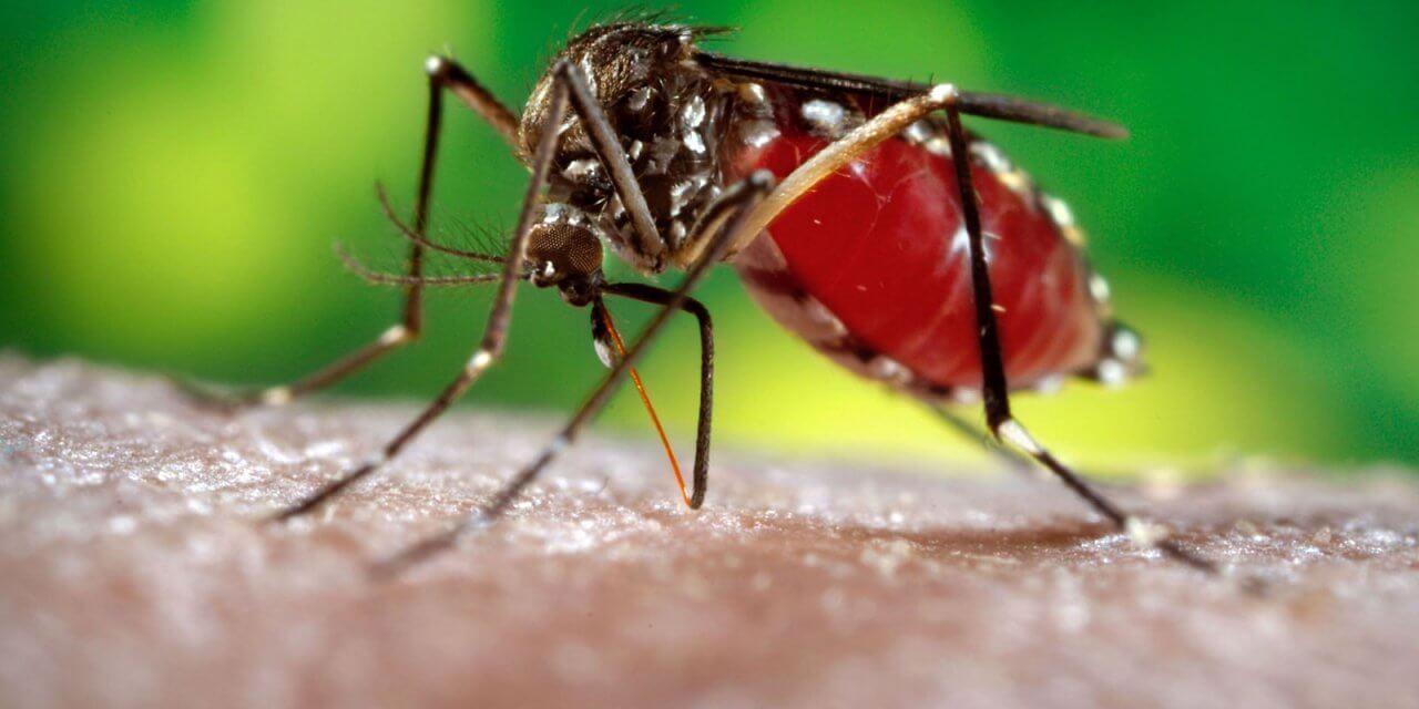 Bệnh sốt xuất huyết nên ăn gì?