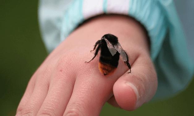 Cách chữa ong đốt hiệu quả
