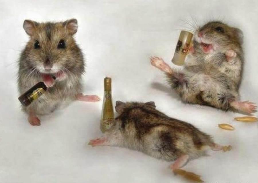 Cách uống rượu không say không thể bỏ qua